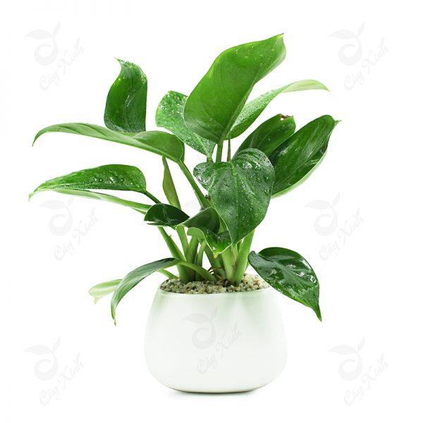Các loại cây trồng trong nhà tốt nhất