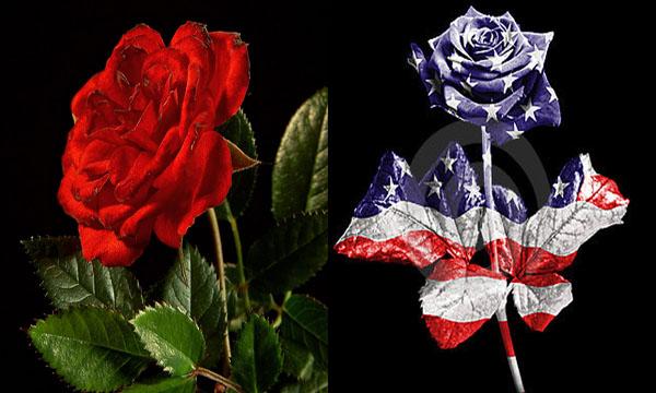 Quốc hoa của Mỹ là hoa gì?