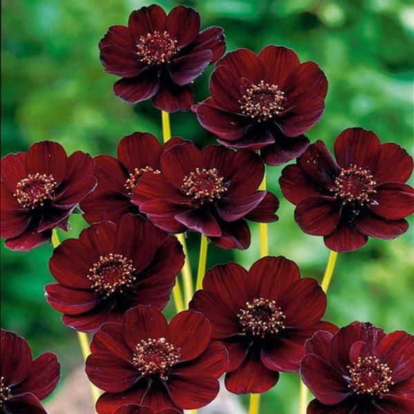 Top 10 loài hoa đẹp nhất thế giới hiện nay