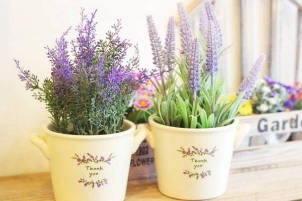 Nên trồng cây gì trong phòng ngủ để bảo vệ sức khoẻ