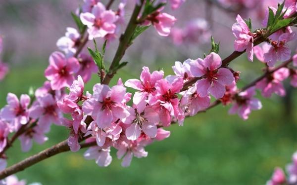 Các loại hoa ngày Tết đẹp và ý nghĩa