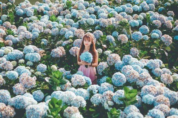 Điểm danh những cánh đồng hoa đẹp nhất ở Đà Lạt