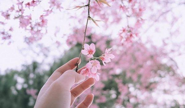 Những loài hoa tượng trưng cho sự cô đơn