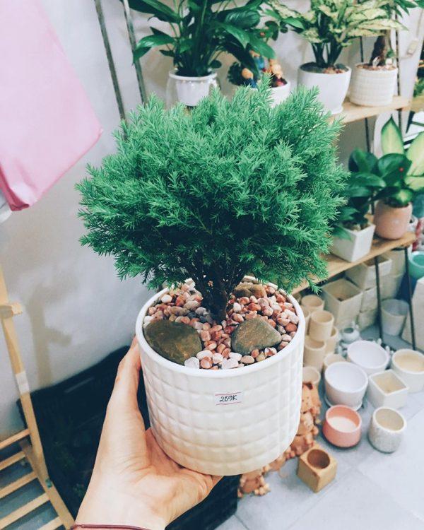 5 loại cây thanh lọc không khí cho không gian thêm trong lành