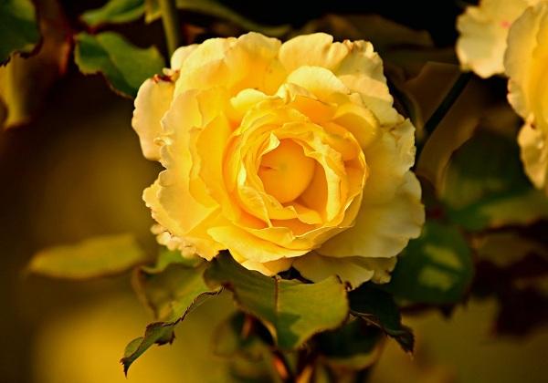 các loại hoa màu vàng đẹp nhất