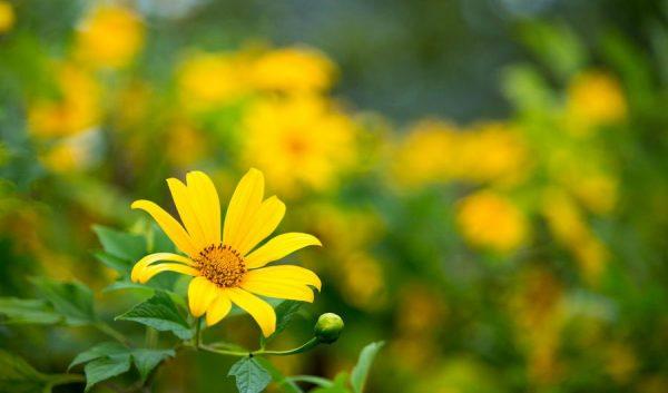 Điểm danh những loại hoa màu vàng đẹp nhất
