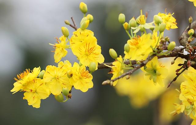 những loại hoa màu vàng đẹp